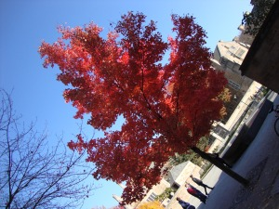 A árvore vermelha