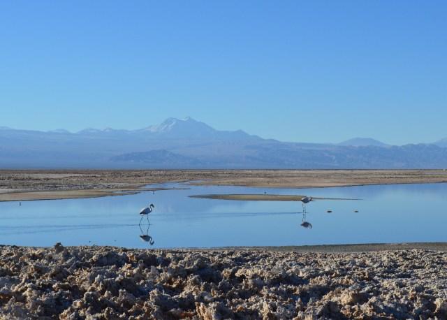 Reserva Nacional dos Flamingos, no Salar de Atacama.