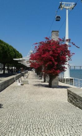 Árvore vermelha do Parque das Nações